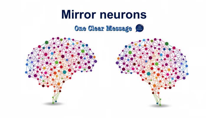 Mirror neutrons in the brain