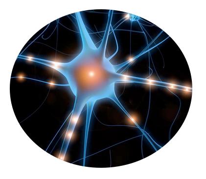 neuroscience in business