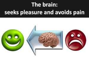 Neuroscience of the brain the SCARF model