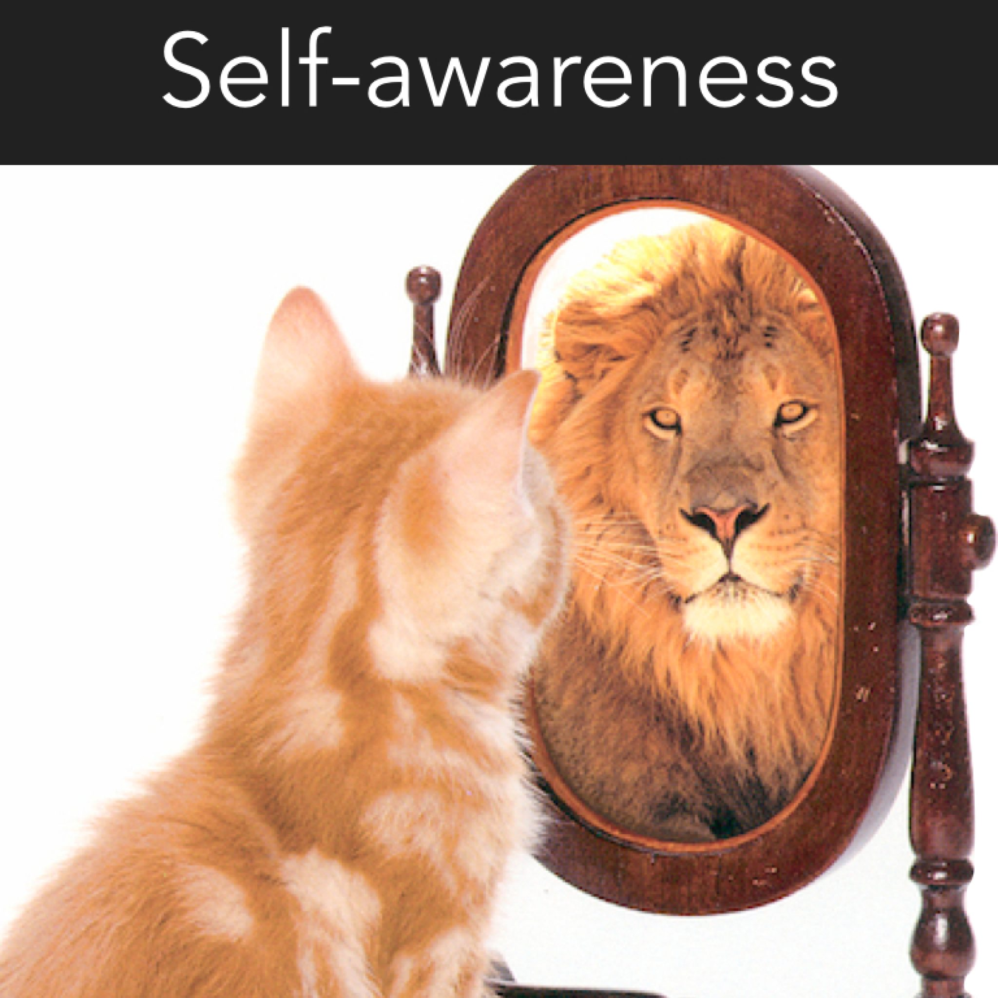 Key components of EI. self awareness